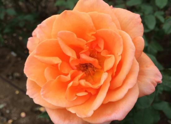 オレンジ色!川崎卓球ジムのチームカラーですね!