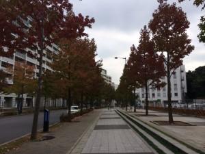 新百合ヶ丘!街路樹は色づき始めていました\(^o^)/