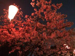 上野公園で花見②