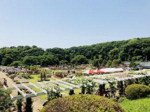ばら苑!生田緑地!良い天気でした!(*^_^*)