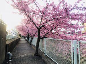 百合ヶ丘に引っ越しても毎年見に来たいと思います!!!